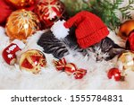 Stock photo funny kitten sleeps in christmas bright red decorations happy new year 1555784831