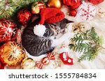 Stock photo funny kitten sleeps in christmas bright red decorations happy new year 1555784834