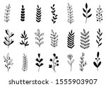 collection forest fern... | Shutterstock .eps vector #1555903907