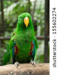 parrot bird sitting on the perch | Shutterstock . vector #155602274