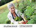 Senior Woman Picking Tomatoes...