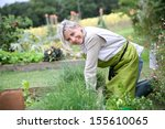 Senior Woman Planting Aromatic...