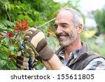 Senior Man In Garden Cutting...