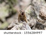 Cute Ground Squirrel Sitting O...