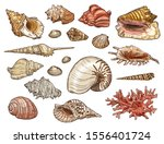 Seashell And Coral Sketches...
