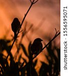 Pair Of Sparrows Silhouettes At ...