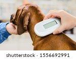 Veterinarian Checking Microchip ...