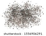 skull and bones scattered top... | Shutterstock . vector #1556906291