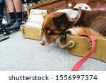 Dog In Street In Guitar Case