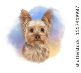 Portrait Of Yorkshire Terrier...