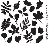 collection of different leaves... | Shutterstock .eps vector #155757215
