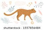 Wild Cat Leopard Walking In...