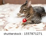 Stock photo photo of a striped kitten with a christmas toy close up 1557871271
