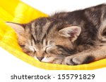 Stock photo asleep kitten on a hammock made of cloth isolated on white background 155791829