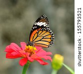 Stock photo butterfly common tiger 155793521