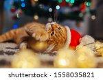 Ginger Cat Wears Santa's Hat...