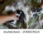 Stock photo little gray newborn kitten sleeps on a checkered bedspread 1558419614