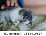 Stock photo little gray newborn kitten sleeps on a checkered bedspread 1558419617