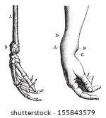 fracture of the lower extremity ... | Shutterstock .eps vector #155843579