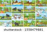 background scenes of animals in ...   Shutterstock .eps vector #1558479881
