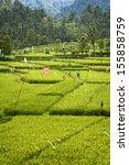 bali rice fields. high up in... | Shutterstock . vector #155858759