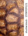 Stock photo blurred pattern of tortoise shell cropped shot of tortoise shell blurred abstract nature 1558939121
