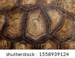 Stock photo blurred pattern of tortoise shell cropped shot of tortoise shell blurred abstract nature 1558939124