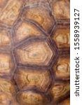 Stock photo blurred pattern of tortoise shell cropped shot of tortoise shell blurred abstract nature 1558939127