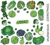 hand drawn sketch style cabbage ... | Shutterstock .eps vector #1559079431