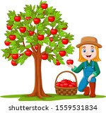 female farmer gathering apples... | Shutterstock .eps vector #1559531834