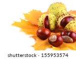 Horse Chestnut On Yellow Maple...