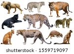 African predator animals...