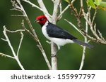 a colorful red black and white... | Shutterstock . vector #155997797