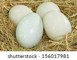 Four Fresh Free Range Duck Egg...