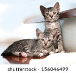 Stock photo two kittens on stair 156046499