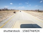 Donkeys Crossing A Deserted...