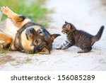 Stock photo little kitten playing with big dog 156085289