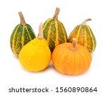 Five Autumnal Ornamental Gourds ...