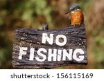 Kingfisher  Alcedo Atthis  On...