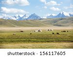 horses pasturing in mountains... | Shutterstock . vector #156117605