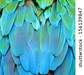 colorful feathers  harlequin... | Shutterstock . vector #156139847