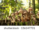 Family Of Mushrooms On Old...