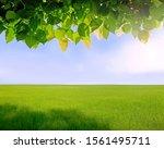 green field and blue sky empty. ... | Shutterstock . vector #1561495711