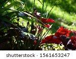 Shady Garden In Sunny Day. In ...