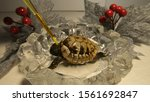 Stock photo bathing and cleaning of tortoise closeup view on very little relaxed tortoise bathing in crystal 1561692847