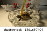 Stock photo bathing and cleaning of tortoise closeup view on very little relaxed tortoise bathing in crystal 1561697404