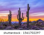 Silhouette  Stand Of  Saguaro...