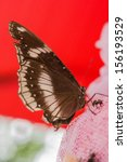 a butterfly is eating... | Shutterstock . vector #156193529