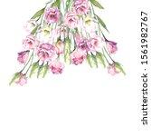 flowers illustration on white... | Shutterstock . vector #1561982767