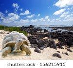 Large Turtle  Megalochelys...